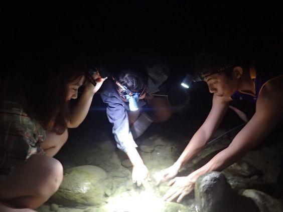 夜間捉蝦體驗
