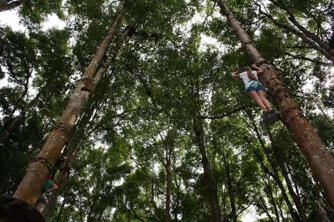 【玩家新選】雪梨~樹頂探險、超澎湃龍蝦海鮮盤、三段藍山纜車6日