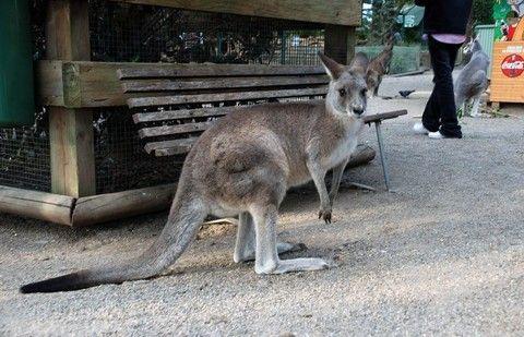 FEATHERDALE野生動物園