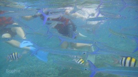 【帛琉輕鬆遊4日】二次出海、大斷層、牛奶湖、海人環礁奇景區~愛來水漾會館[含稅]