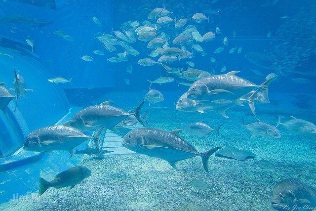 熱帶魚水族館