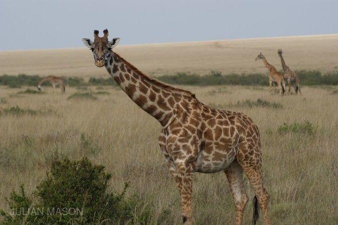 馬賽馬拉自然保護區
