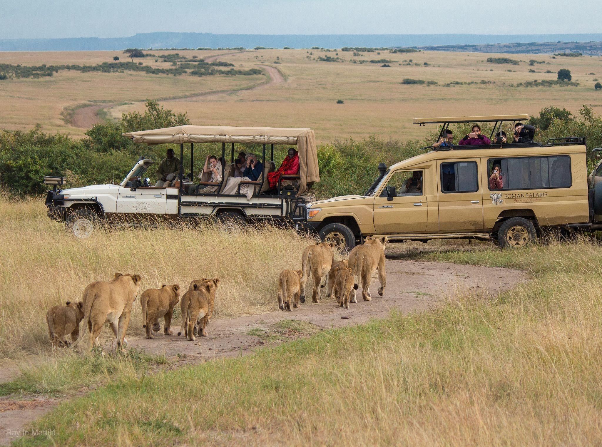 東非肯亞~動物奇觀獵遊.四大國家公園.五大特色住宿10日<6人成行>