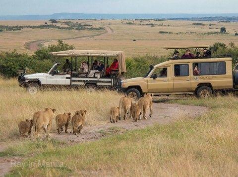 【主題旅遊】《市場獨家》肯亞、衣索比亞雙國.馬賽馬拉動物獵遊.拉利貝拉岩石教堂.部落市集12日