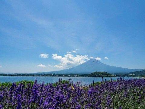 【愛上薰衣草】富士薰衣草、三麗鷗彩虹樂園、箱根、東京迪士尼5日