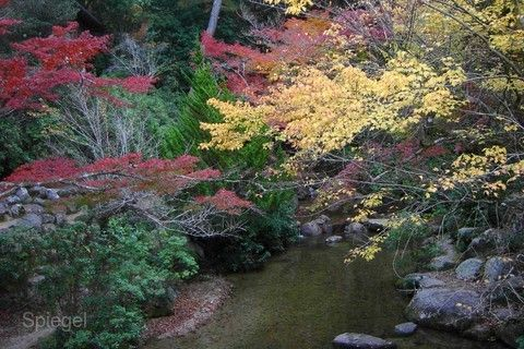 紅葉溪庭園