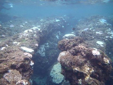 【中秋連休】小琉球海洋浮潛.夜間生態探索2日(台中出發)