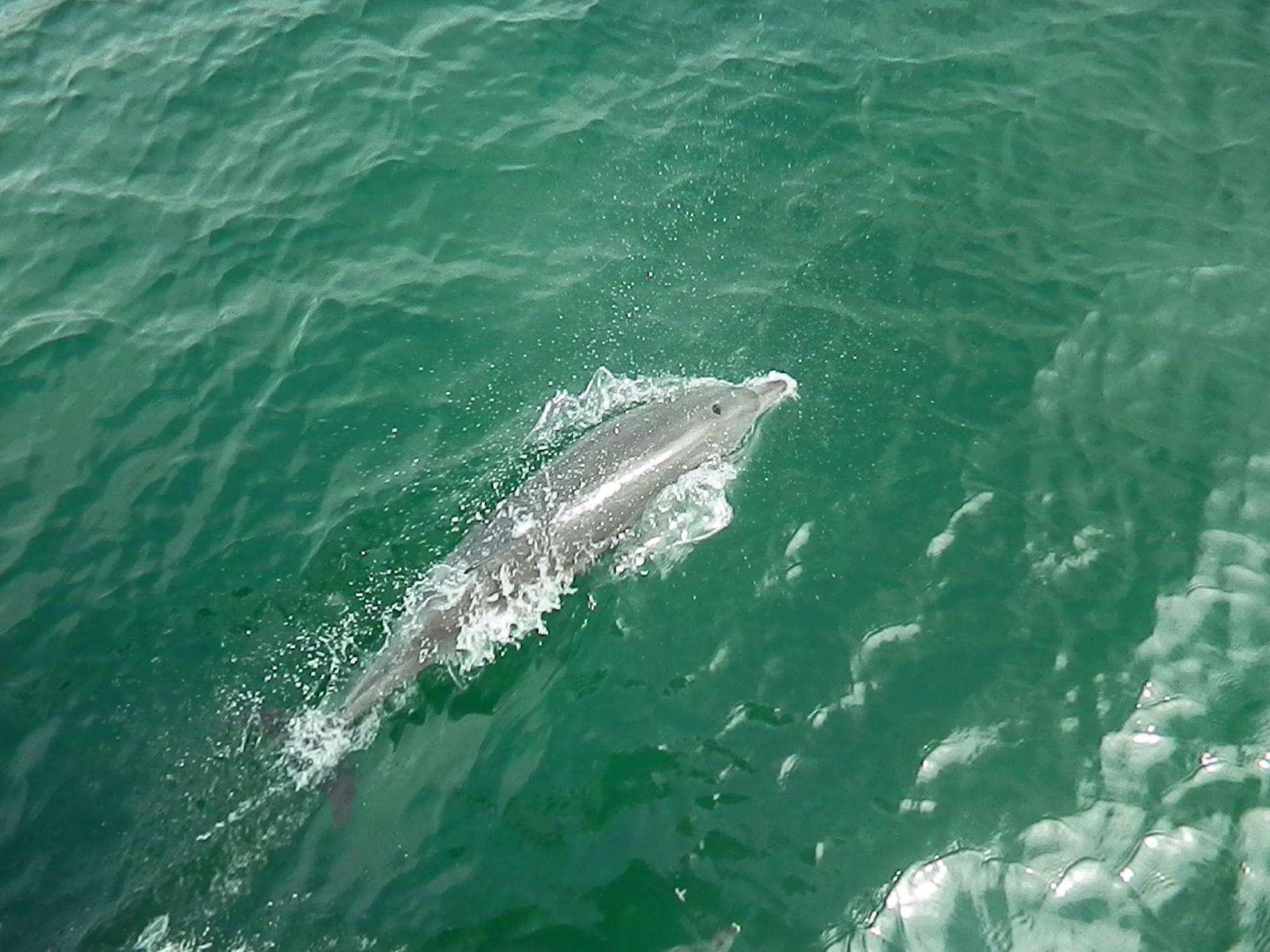 漫遊關島小資5日(海底漫步+海豚追蹤+FAI FAI海灘俱樂部)
