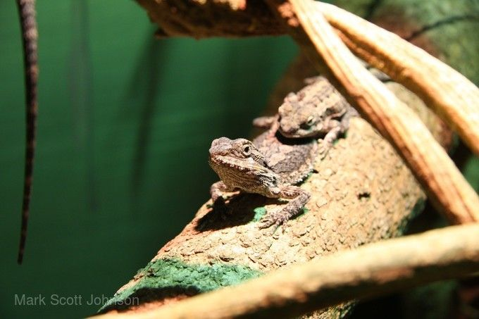 澳洲爬蟲動物公園