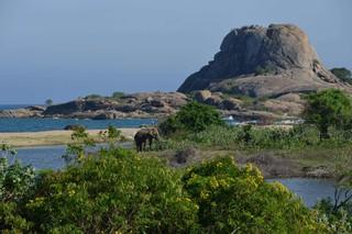 斯里蘭卡野生動物園天空之城斯基里雅五星渡假村全覽九日遊指定團早鳥優惠(1月起)