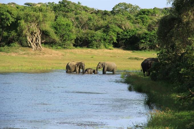 綠的伊甸園~ 斯里蘭卡 雅拉生態風情9天
