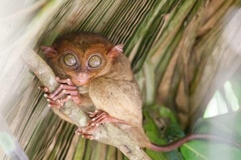 眼鏡猴保護區