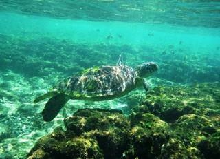 【就是愛帛琉】愛萊環礁,海人環礁奇景區,(二日出海),牛奶湖水域SPA 五日(含稅險)