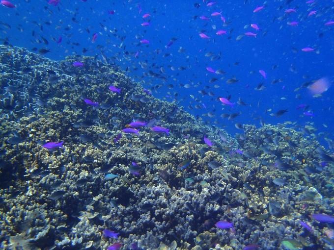 巴斯卡多島Pescador Island