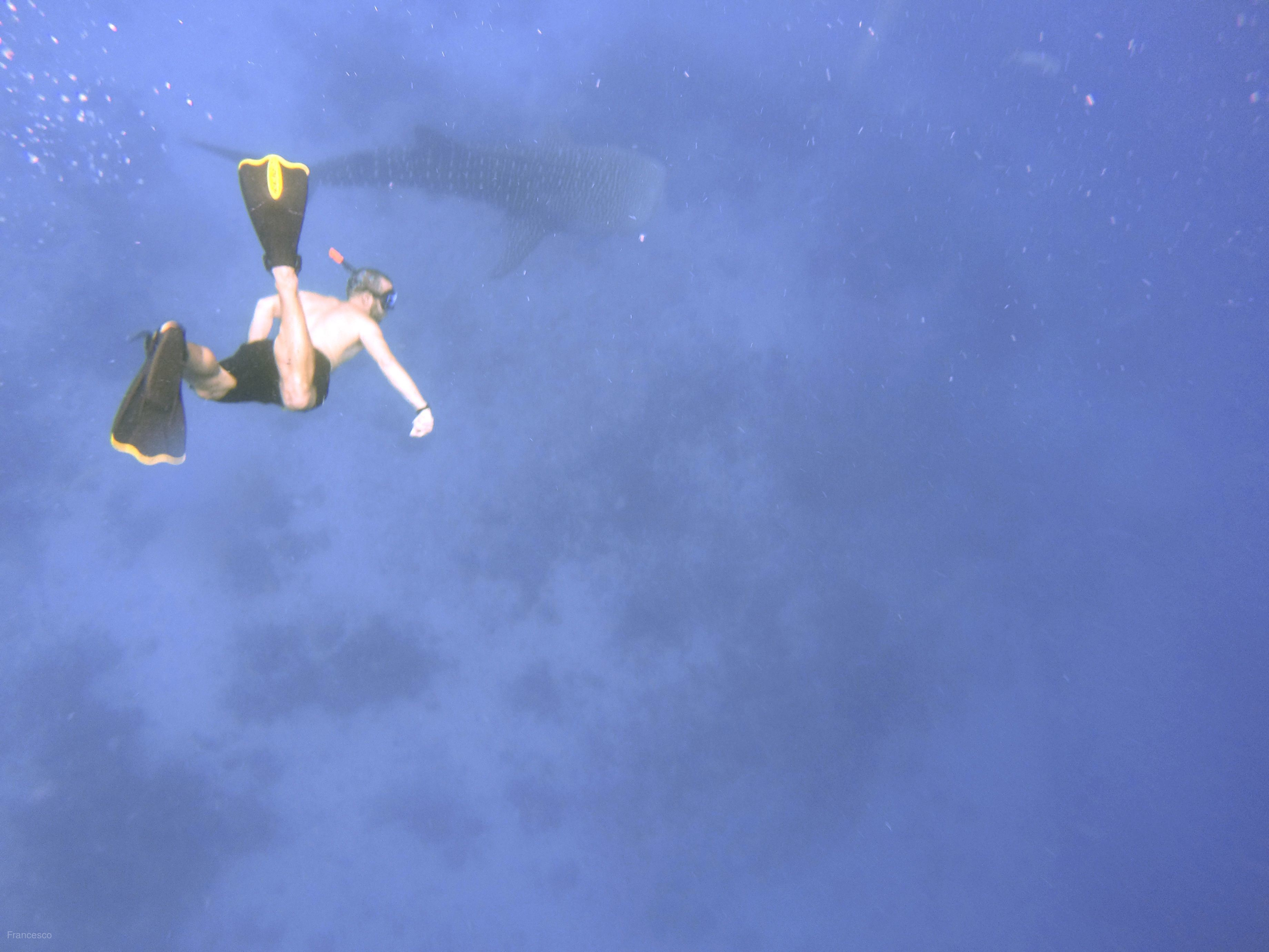 【看見新宿霧~尊爵版】泳抱鯨鯊+沙丁魚風暴、世界五大大斷層巴里卡薩島浮潛、探索薄荷島(眼鏡猴、海豚遊蹤)、海鮮美食豪華雙島五日[含稅簽]