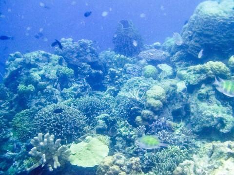 玫瑰珊瑚花園