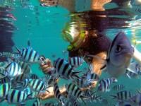 浮潛之旅Reef and Wreck