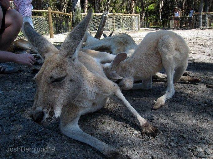 嘉華野生動物公園