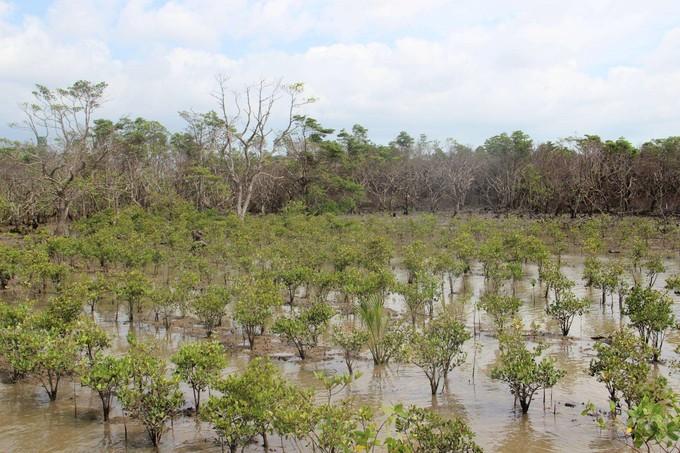 海口紅樹林
