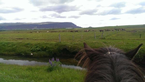 冰島騎馬體驗(惠拉蓋爾濟)