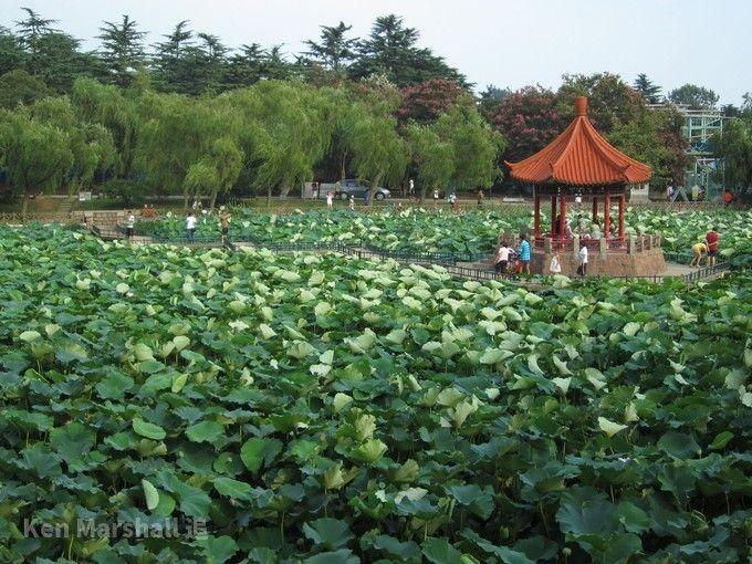 青島中山公園