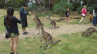 塔斯瑪尼亞野生動物園