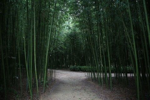 太和江十里竹林