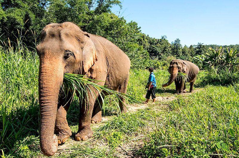 【小城故事金三角風情】聖獅公園放天燈體驗大象便便紙DIY五天-長榮