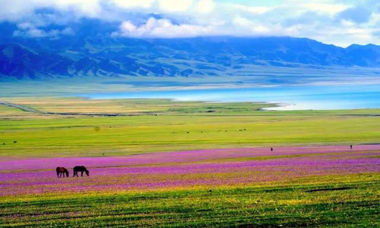 春起花湧北疆環線十二天