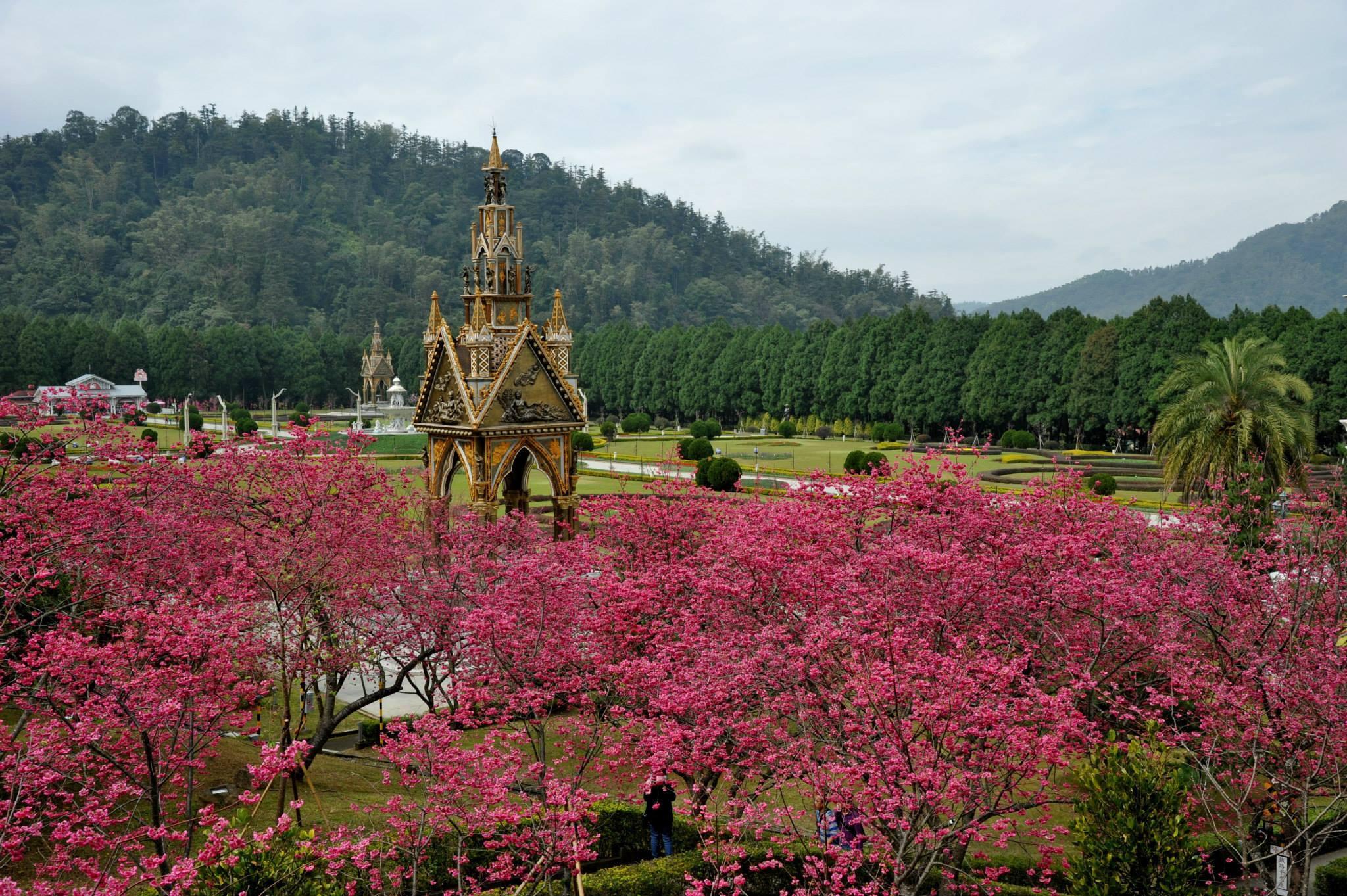 台灣樂遊遊-南投九族櫻花祭二天