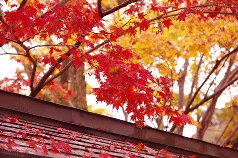 《JTB|日本第一旅遊品牌》紅葉交響曲 世界遺產高野山 天空祕境列車 深度宿坊 溫泉設計旅宿5天4夜(10月限定秋楓高野山)