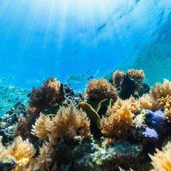 帛琉海陸豪華遊~洛克群島、瘋狂吉普體驗五日