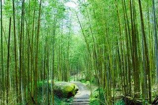 《螢火蟲季》溪頭杉林溪森呼吸.高美濕地.彩虹眷村二日(雙人房)
