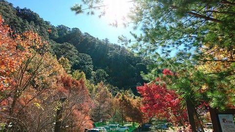 武陵農場楓情森呼吸一日遊