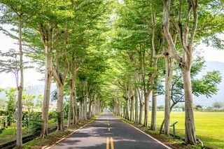 【花東漫遊】美麗心花東 綠色隧道 美食饗宴 3 日